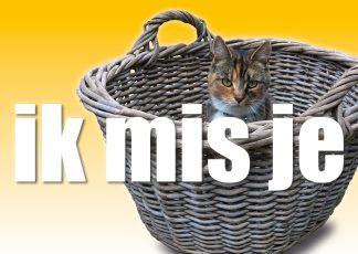 Postkaart - corona - quarantaine Ik mis je - kat - Miauw