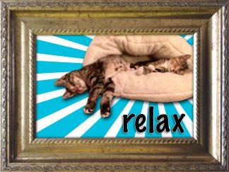 Baroklijstje katten relax