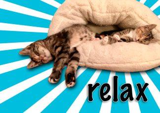 grappige kattenkaart relax cats poezen